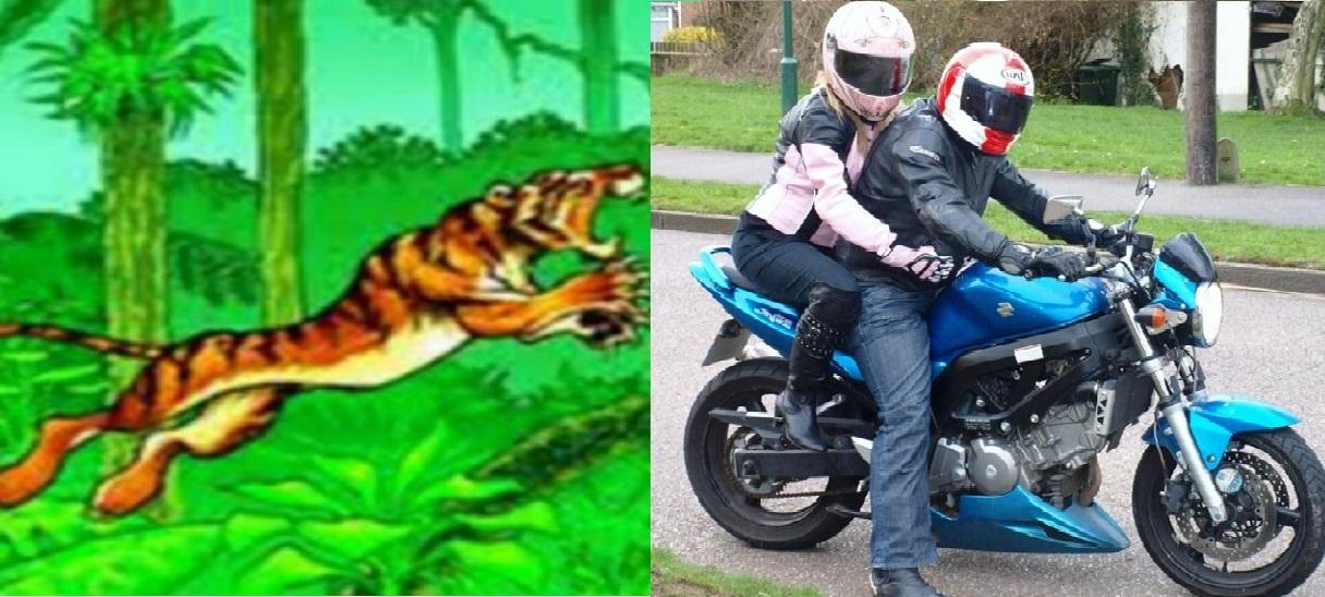 निकुञ्जको सडकमा पाटे वाघद्वारा मोटरसाइकल यात्री माथि आक्रमण:आमा बेपता, छोरा घाइते राष्ट्रिय निकुञ्ज