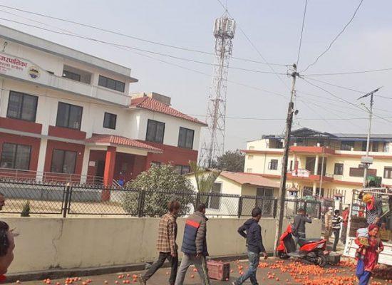 किसानहरुले नगरप्रमुख धिरज शर्मा बस्यालको कार्यकक्षमा टमाटर फाले
